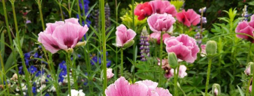 Garden visit: St John\'s Garden, Regents Park – The Lady Gardener